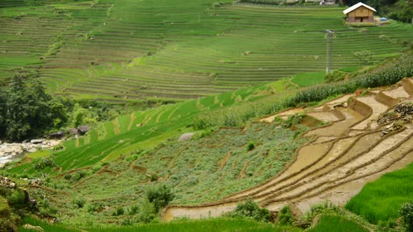 Rice Terraces In Green Valley Sapa Vietnam