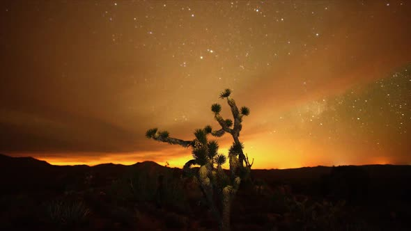 The Night Sky Mojave Desert