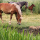 horses and foal on pasture - PhotoDune Item for Sale
