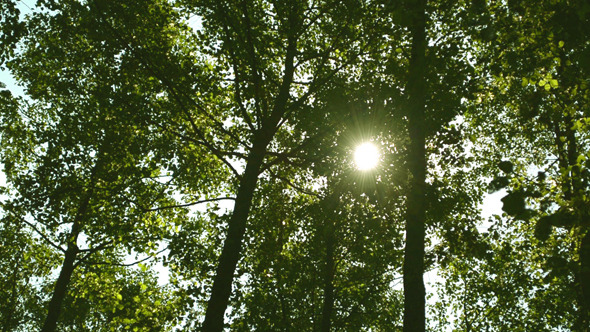 Tree & Sun