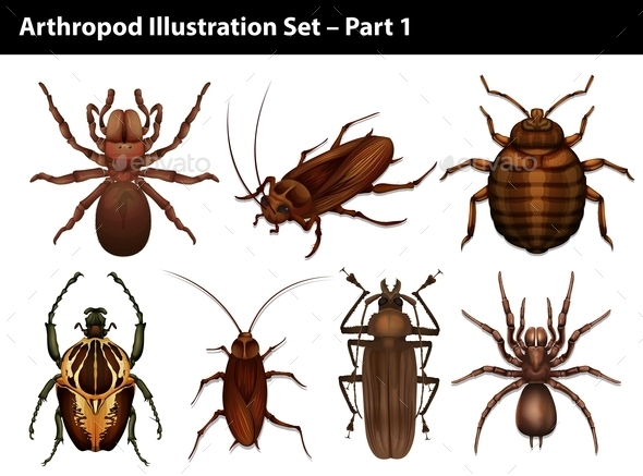 GraphicRiver Insects 10988781