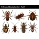 Insects - GraphicRiver Item for Sale