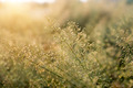 Small flower grass and sunlight. - PhotoDune Item for Sale