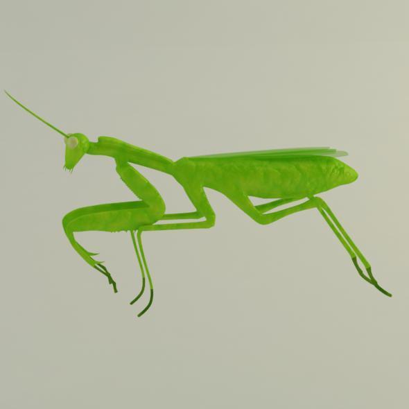 3DOcean Mantis 10995509