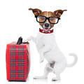 dog with luggage - PhotoDune Item for Sale