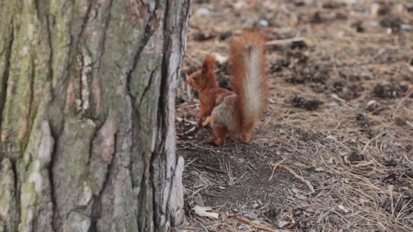 Squirrel Runs