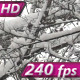 Beautiful Winter Forest - VideoHive Item for Sale