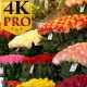 Colorful Tulips Displayed on the Flower Shop - VideoHive Item for Sale