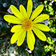 Beautiful Yellow Spring Flower - VideoHive Item for Sale