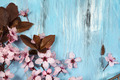 cherry blossom on rustic wooden backkground - PhotoDune Item for Sale