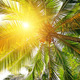 sunlight through the leaves of palm trees - PhotoDune Item for Sale