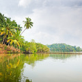 Tropical jungle on the lake - PhotoDune Item for Sale