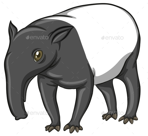 GraphicRiver Tapir 11010694