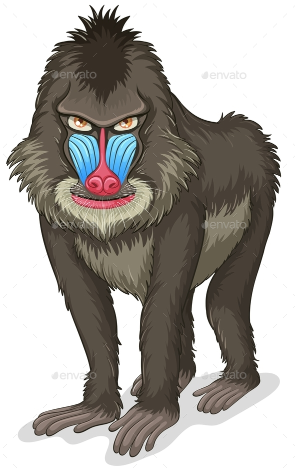 GraphicRiver Baboon 11010748