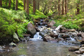 mountain river and coniferous forest - PhotoDune Item for Sale