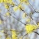 Yellow Spring Flowers - VideoHive Item for Sale