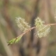 Inflorescence Willow - VideoHive Item for Sale