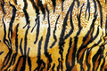 Tiger background - PhotoDune Item for Sale