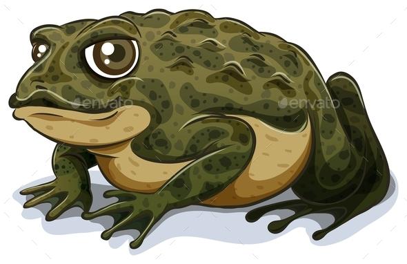 GraphicRiver Toad 11020587