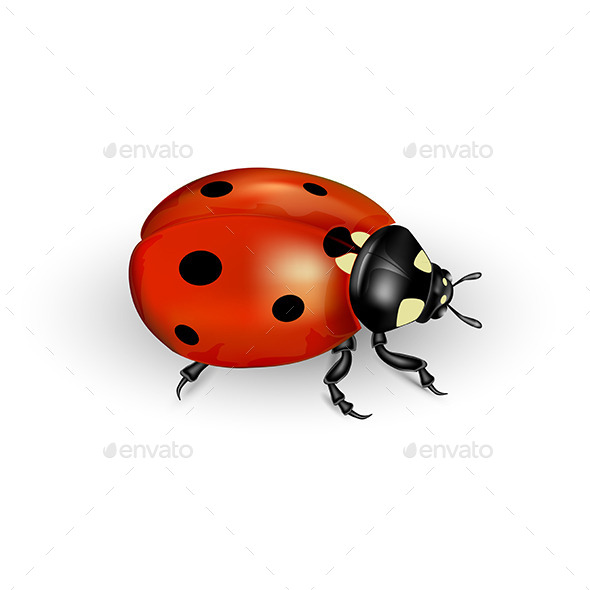 GraphicRiver Ladybug 11021622