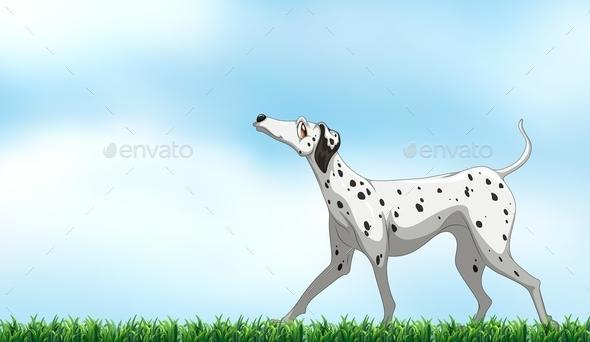 GraphicRiver Dalmatian 11021702