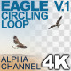 Eagle Circling - VideoHive Item for Sale