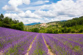 Lavender field and village - PhotoDune Item for Sale