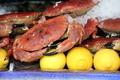some crab - PhotoDune Item for Sale