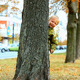 Child Hiding Behind Tree in Park - VideoHive Item for Sale