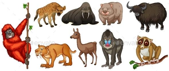 GraphicRiver Wild Animals 11026923