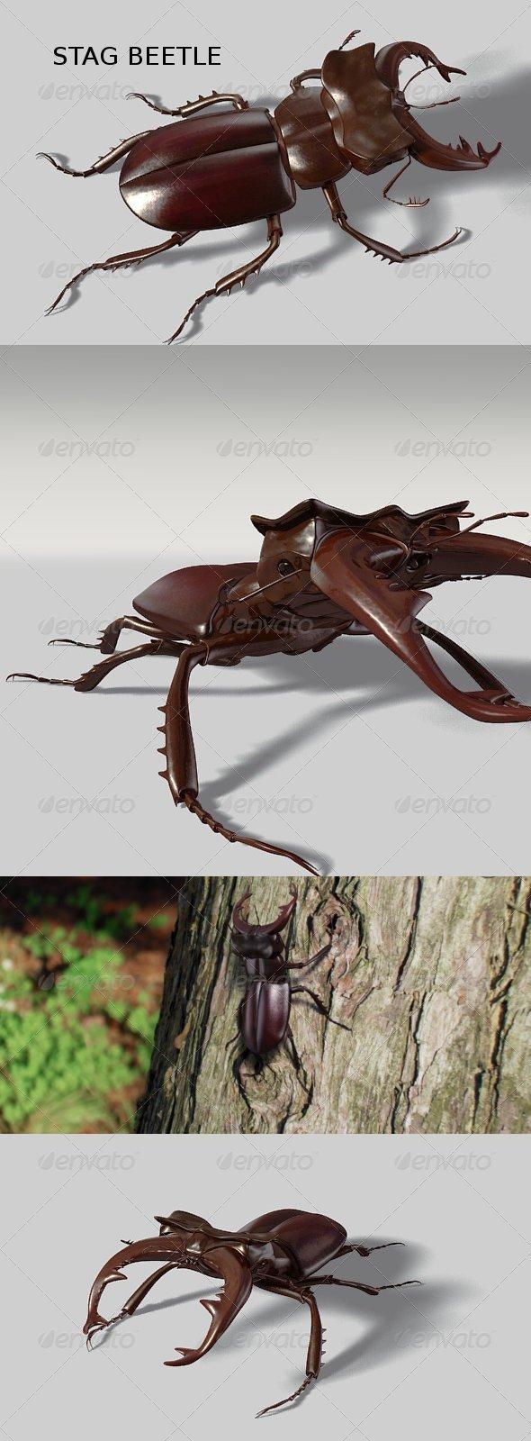 3DOcean Stag beetle 136665