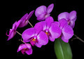 Orchids flowers - PhotoDune Item for Sale