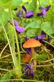 Violet flowers and small Esculentus mushrooms - PhotoDune Item for Sale