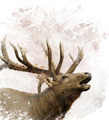 Bull Elk Watercolor - PhotoDune Item for Sale