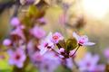 Springtime Flowers 16 - PhotoDune Item for Sale