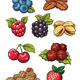 Nuts and Berries - GraphicRiver Item for Sale