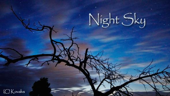Dead Tree And Night Sky