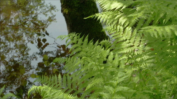Green Ferns on the Forest