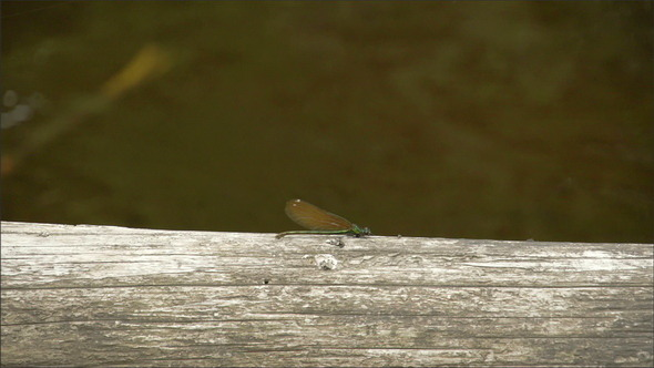 A Dragonfly Sticking on the Wood