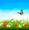 Nature summer colorful flowers with butterfly.  - PhotoDune Item for Sale