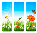Nature summer banners with colorful flowers and butterfly.  - PhotoDune Item for Sale