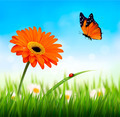 Spring background. Orange beautiful flower and a butterfly.  - PhotoDune Item for Sale