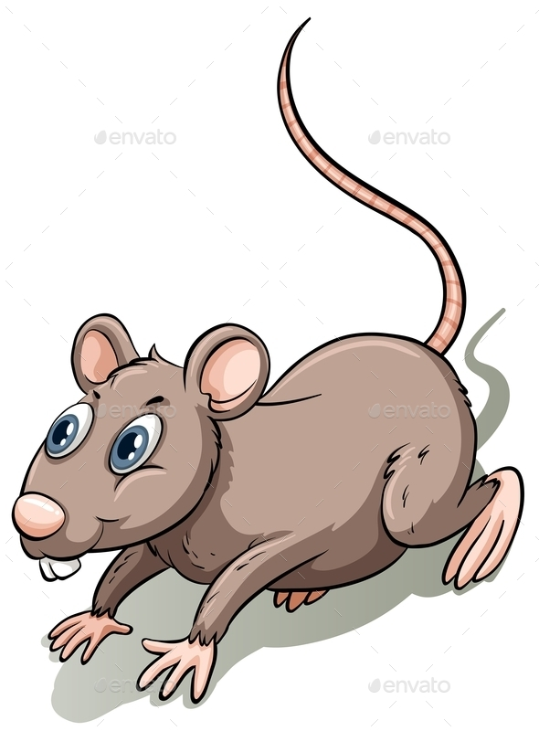 GraphicRiver Brown Rat 11069891