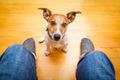 dog begging - PhotoDune Item for Sale