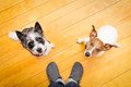 two dogs and ower at home - PhotoDune Item for Sale