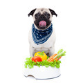 hungry dog with healthy bowl - PhotoDune Item for Sale