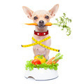 healthy hungry dog - PhotoDune Item for Sale