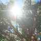 Sun Rays Through Tree Branch 01 - VideoHive Item for Sale