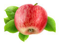 Apple with leaves - PhotoDune Item for Sale