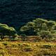 African landscape - PhotoDune Item for Sale